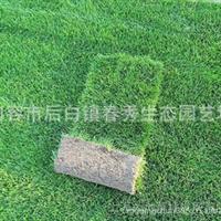 供应山西绿化草坪 草皮