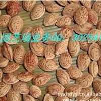 供应批发:桃核,桃树种子,毛桃种子,毛桃核等
