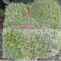 大量供应足球场专用马尼拉 草坪批发 量大从优 15952991970