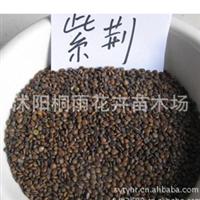 大量低价供应巨紫荆种子 价格优惠 品种齐全