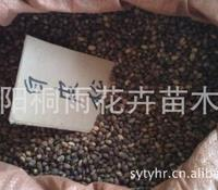 大量供应种子 白皮松种子 白皮松价格 绿化种子 林木种子