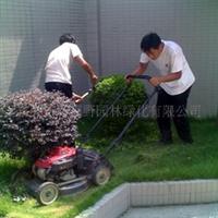 供应绿化修剪保养护理工程