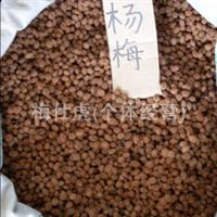 杨梅绿化种子、江西九江批发杨梅种子