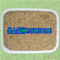 农价供应优质 狗牙根 百慕大 马里拉 草坪 草籽 种子