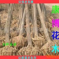 供[园林绿化苗木]栾树、国槐1-18公分