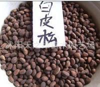 专业批发供应白皮松种子(欢迎来电咨询)