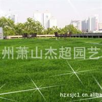 供应园林绿化地被类  屋顶绿化   佛甲草