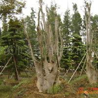 黄金地段寻求有盆景,树桩资源的客户合作建盆景园林