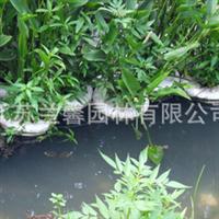 供应兰馨园林 生态水处理改善景观 耐污抗污经久耐用 生物浮床