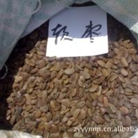 供应今年新采优质软枣种子,黑枣种子,君迁子