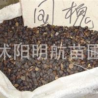 批发供应优质国槐种子 绿化苗木 当年新采