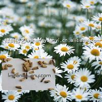 供应菊花种子,草花种子:洋甘菊,宾菊 ,bosm,花卉种子