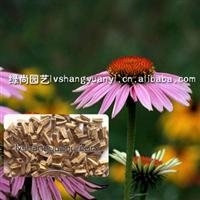 批发草花种子:翠菊种子,松果菊种子,牵牛花种子,马兰种子等