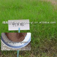 批发供应优质草坪种子 狗牙根 草籽 草种不脱壳 暖季型 当年新采