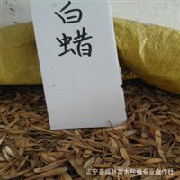 批发供应优质白蜡种子 当年新采 保质保量 高发芽率 一级生产