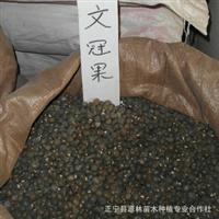 特价供应文冠果种子 确保品种质量 可到付