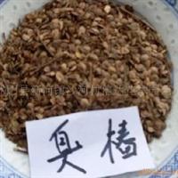 低价供应当年现采摘的臭椿种子 石楠种子