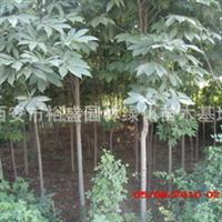 供应七叶树/陕西七叶树直销基地/西安七叶树绿化苗木繁育基地