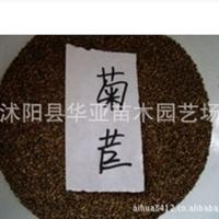 特价销售进口牧草种子=欧洲菊苣子 每斤售价45元  营养价值丰富