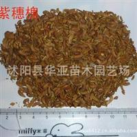 批发供应当年新采的紫穗槐种子 棉槐 椒条 棉条 穗花槐种子