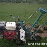 大量批发早熟禾草坪-百慕大草坪-工程绿化地被草