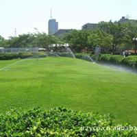 句容大量销售绿化景观苗木-绿化草坪-别墅草坪【学校草坪】