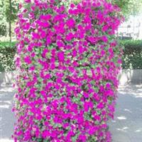 出售立体园林绿化用花柱 花塔 花球等立体园艺用品400-6627727