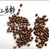 沙藏2年红豆杉种子,发芽率绝对可靠  可以货到付款