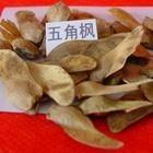 花卉种子五角枫种子青桐种子桃种杏种紫薇种子紫荆种子
