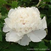 苏湘花卉园艺-你字喜欢的花卉