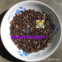 山玉兰种子 野玉兰种子 土厚朴种子 优昙花种子(1公斤)