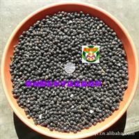 栾树种子 灯笼树种子 摇钱树种子 净种(1公斤)