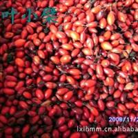 基地批发红叶小檗种子,榉树种子朴树种子栾树种子.黑松种子