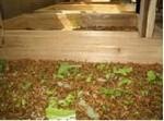 厂家直销大量养殖出售优质黄粉虫