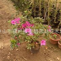 中山工厂区绿化养护工程