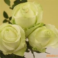 供应玫瑰花, 绣球, 百合,剑兰等