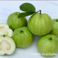 供应台湾品种海南水果特产特级珍珠石榴(芭乐)