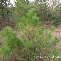 优质绿化苗木,容易成活,价格面议,欢迎订购