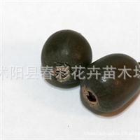 水生植物花卉种子**碗莲种子特价0.2元/粒