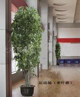 榕树/花卉租赁/花卉出租/花卉租摆/绿化摆放