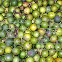 供应竹柏。兴旺树。油渣籽。兴旺竹种子(图)