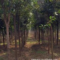 苗木绿化基地承接各种工程