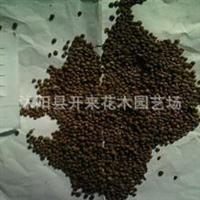 低价批发优质 凤仙花种子 凤仙花苗 进口植物种子批发