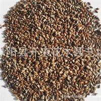 低价批发优质 云杉种子 云杉苗 进口植物种子批发