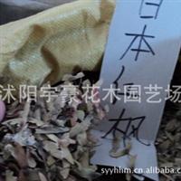 批发零售  日本红枫种子  支持货到付款