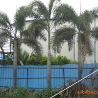 青青草园艺供应狐尾椰子、绿化树、庭院树