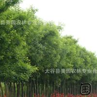 园林绿化        行道树        国槐