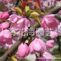 上海绿化苗木大型苗圃—上海花海园艺场