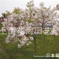 上海花海园艺场供应: 园林绿化苗、庭院绿化苗、工程绿化苗