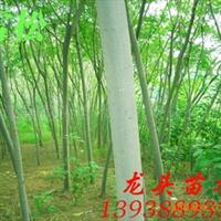 合欢,绿化苗木,乔木,灌木,花灌木,绒花树